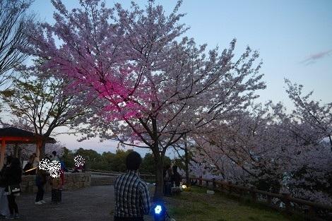 須磨浦公園へ花見